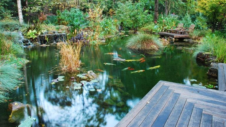 Un bassin à carpes koï, quelques règles avant de construire
