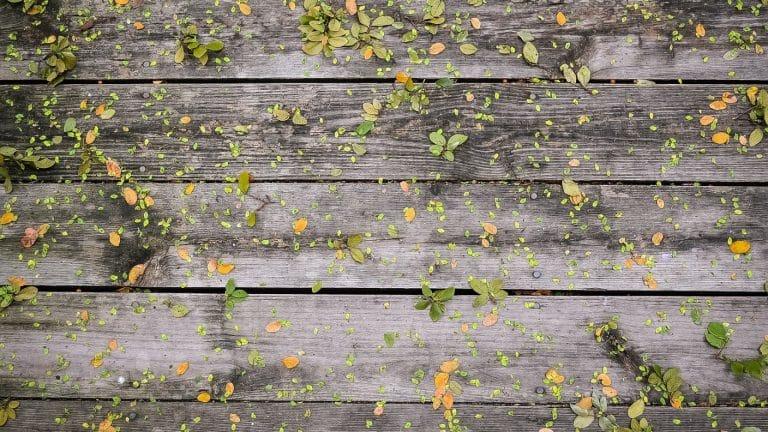 La clôture en bois: avantages et inconvénients
